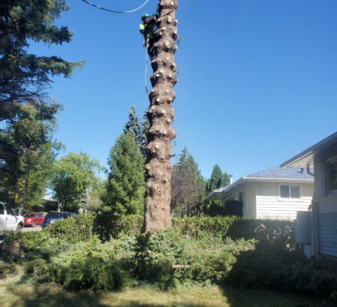 Jemm Tree Removal
