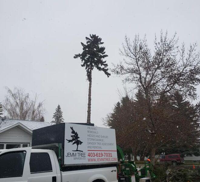 Jemm Tree Services